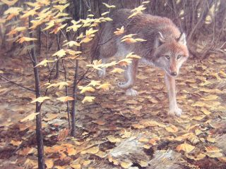 John Seerey Lester Evening Fall Red Wolf Ed Print